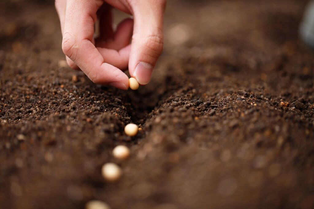 plant seeds for growth